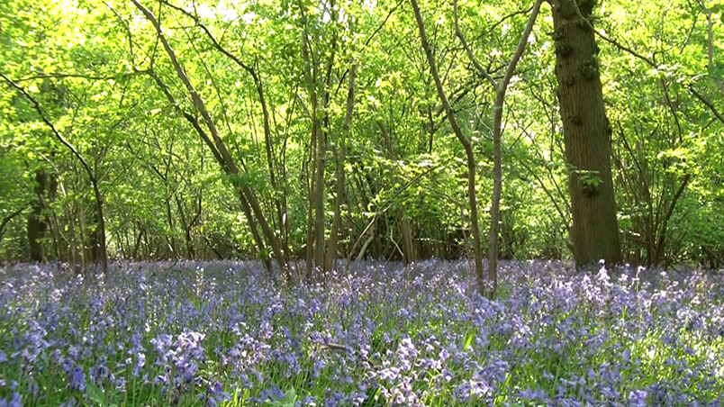 Preserving ancient woodland at the A21